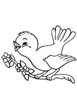 Avestruz para colorear (10/32)