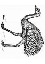 Avestruz para colorear (15/32)