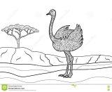 Avestruz para colorear (16/32)