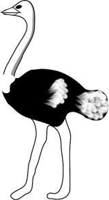 Avestruz para colorear (28/32)