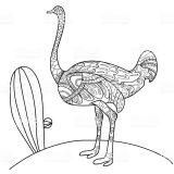 Dibujos de avestruz para colorear (1/32)