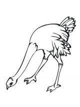 Dibujos de avestruz para colorear (6/32)