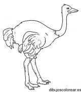 Dibujos de avestruz para colorear (8/32)