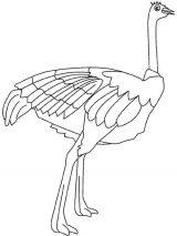 Dibujos de avestruz para colorear (13/32)