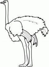 Dibujos de avestruz para colorear (14/32)