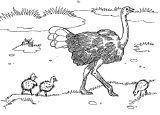 Dibujos de avestruz para colorear (19/32)