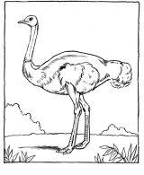 Dibujos de avestruz para colorear (20/32)