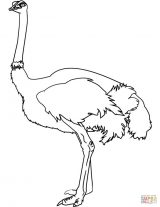 Dibujos de avestruz para colorear (23/32)