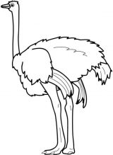 Dibujos de avestruz para colorear (27/32)