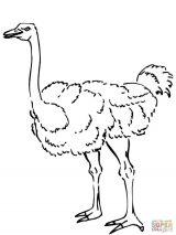 Dibujos de avestruz para colorear (31/32)