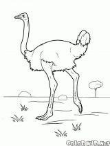 Imágenes de avestruz para pintar (1/13)