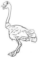 Imágenes de avestruz para pintar (9/13)