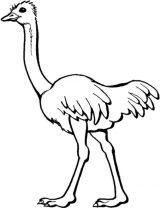 Imágenes de avestruz para pintar (12/13)
