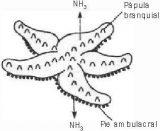 Anélidos y gusanos para colorear (5/123)