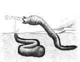 Anélidos y gusanos para colorear (24/123)