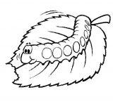 Anélidos y gusanos para colorear (29/123)