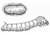 Anélidos y gusanos para colorear (68/123)
