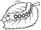 Anélidos y gusanos para colorear (74/123)