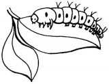 Anélidos y gusanos para colorear (93/123)