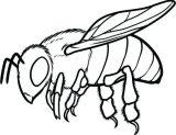 dibujos de abejas para colorear (2/16)