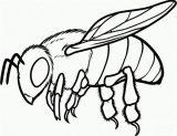 Imágenes de abejas para colorear (6/8)