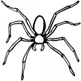 Arañas para colorear (11/20)