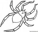Arañas para colorear (14/20)