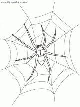 Arañas para colorear (1/20)