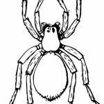 Arañas para colorear (19/20)