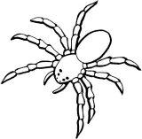 Arañas para colorear (1/10)