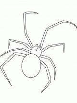 Arañas para colorear (6/16)