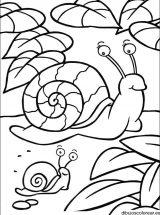 imagenes de caracoles para colorear (20/20)