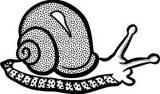 imagenes de caracoles para dibujar (4/16)