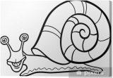 imagenes de caracoles para dibujar (13/16)