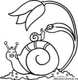 dibujos de caracoles para colorear (12/20)