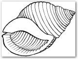 dibujos de caracoles para colorear (13/20)