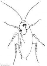 Cucarachas para colorear (4/4)