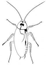 Imágenes de cucarachas para colorear (1/16)