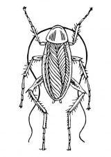Imágenes de cucarachas para colorear (7/16)