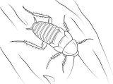 Imágenes de cucarachas para colorear (13/16)