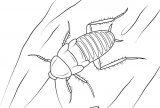 Cucarachas para colorear e imprimir (2/16)