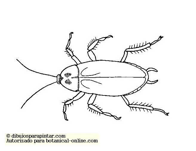Dibujos De Insectos Para Colorear Para Ninos: Cucarachas Para Colorear 2019