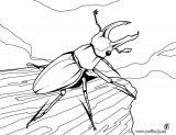 Escarabajos para colorear (1/4)
