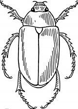 Dibujos de escarabajos para colorear (3/12)