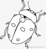Dibujos de escarabajos para colorear (9/12)