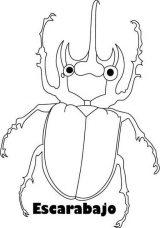 Dibujos de escarabajos para colorear (12/12)