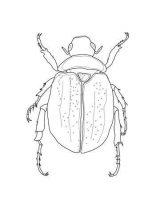 Imágenes para pintar de escarabajos (1/12)