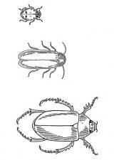 Imágenes para pintar de escarabajos (2/12)