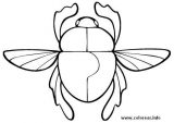 Imágenes para pintar de escarabajos (6/12)