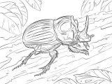 Imágenes para pintar de escarabajos (9/12)